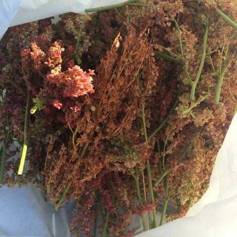 Posen fuld af syre-blomst